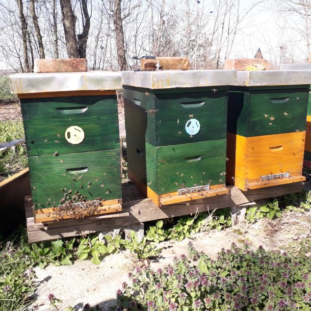 pčelinjak