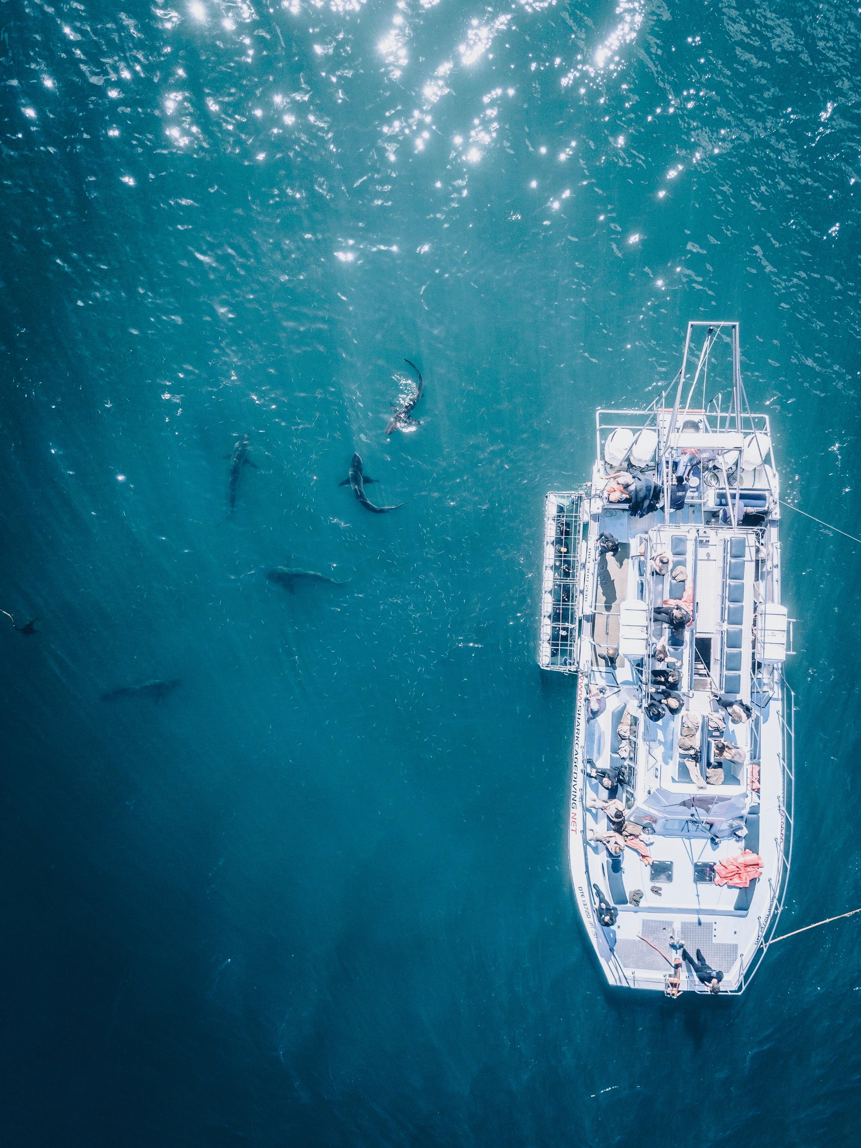 morski pas južna afrika