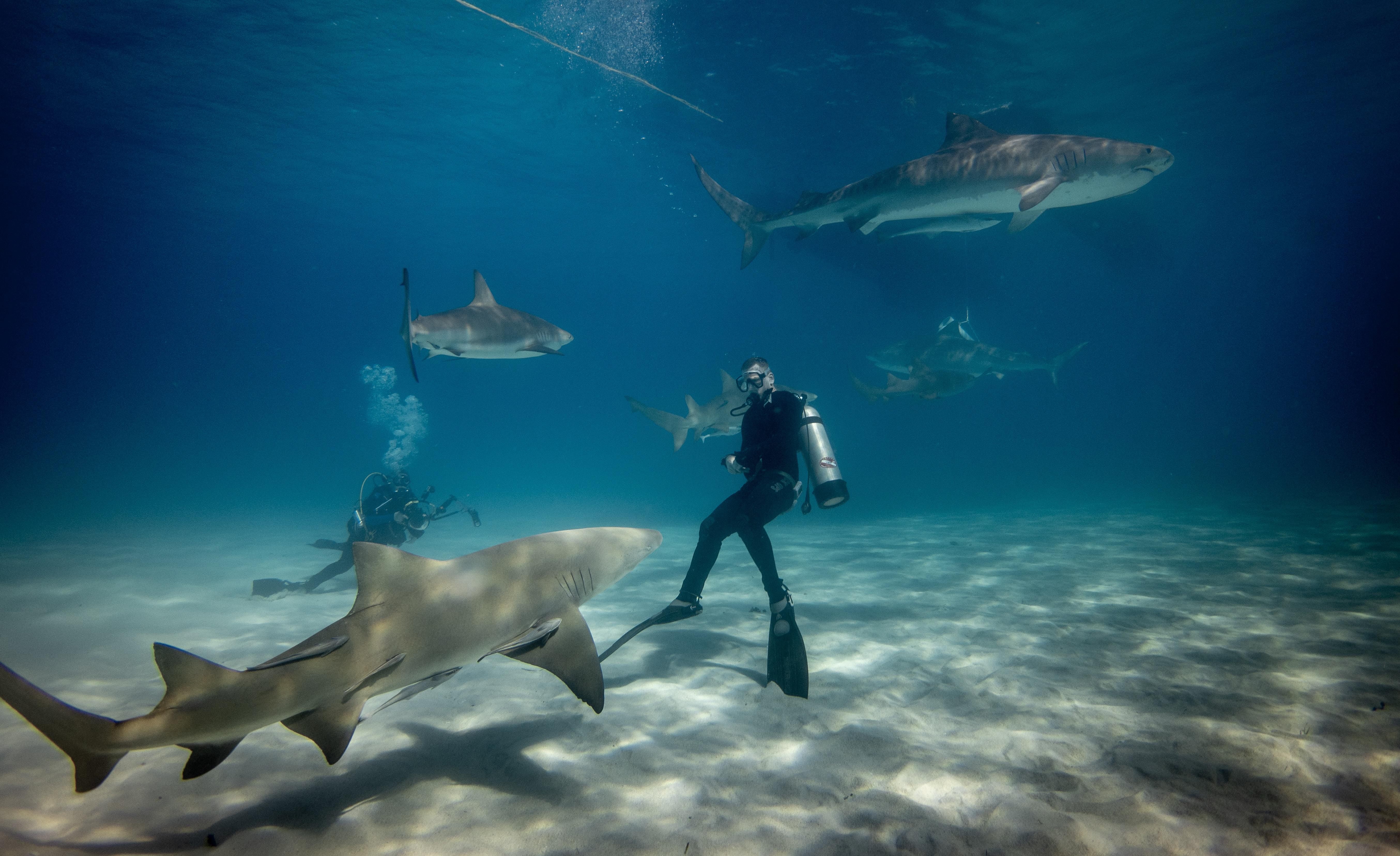 ronjenje s morskim psima