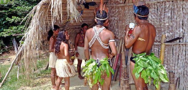 amazona domoroci