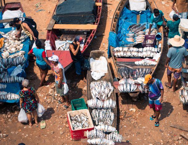 amazona stanovništvo