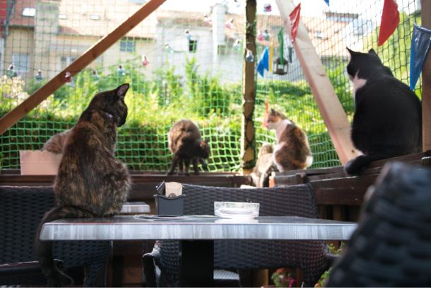 uske galerije maca