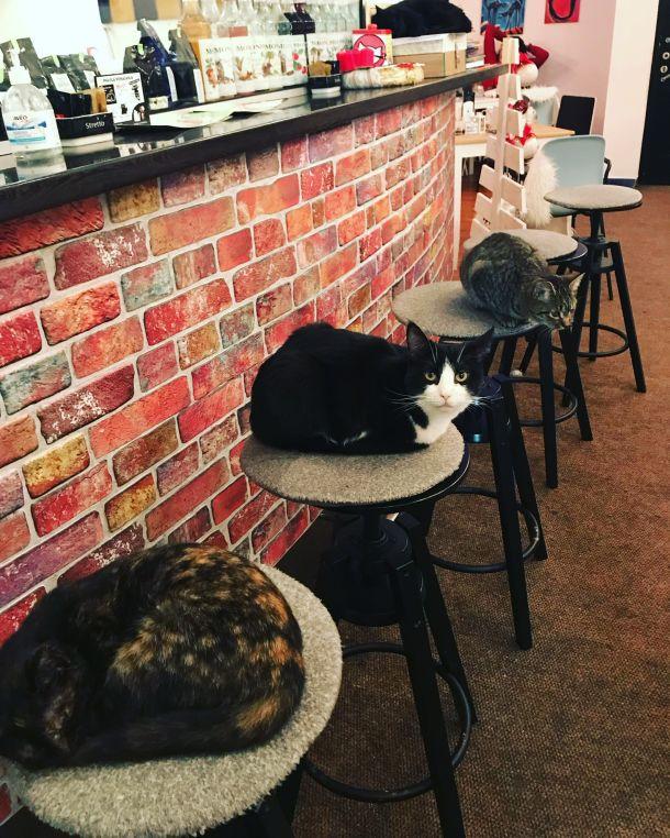 mace zagreb kafe
