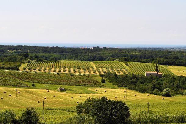 vinogradi santa lucija