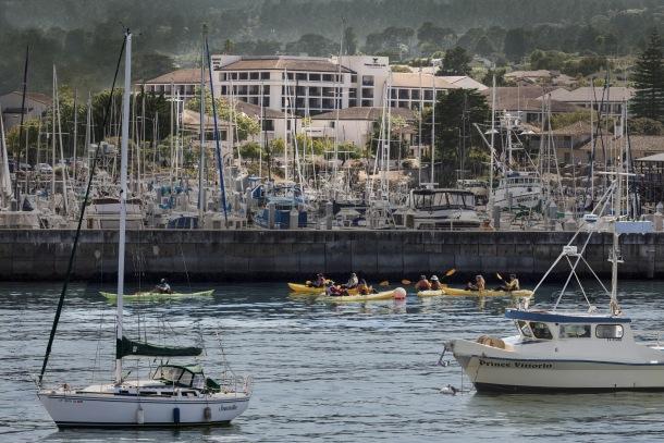 Monterey Jack SAD