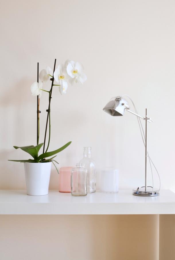 kupovina orhideje