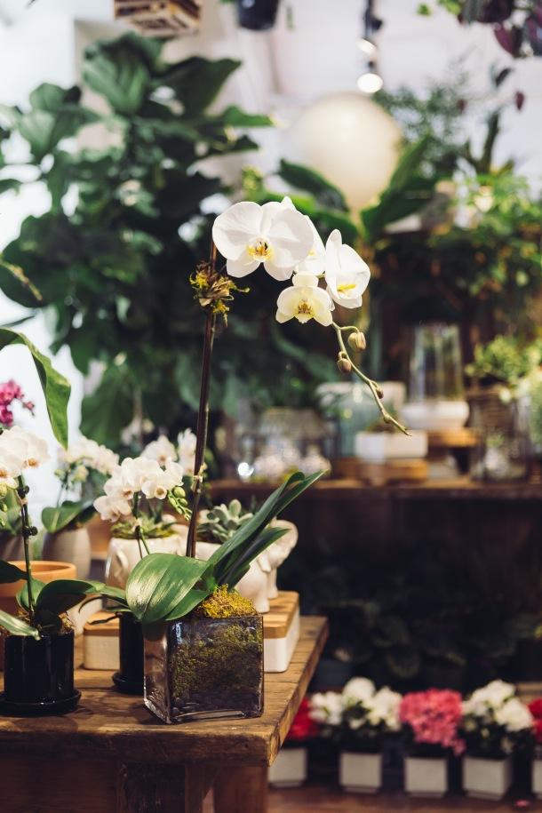 orhideja u domu