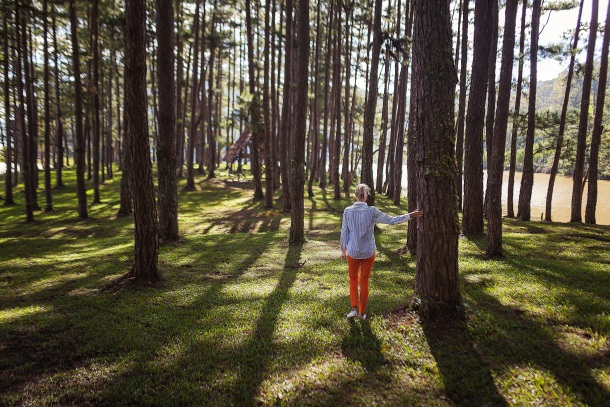 posumljavanje sadnica drvo