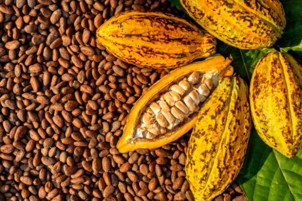 biljka kakaa