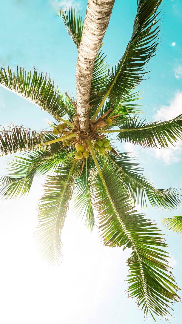 meksiko palma