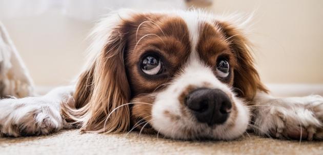 Hrana za male pse jako nam je važna, saznajte najbolju formulu za štence