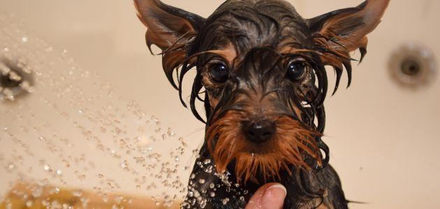 Savjeti i trikovi za kupanje vašeg psa