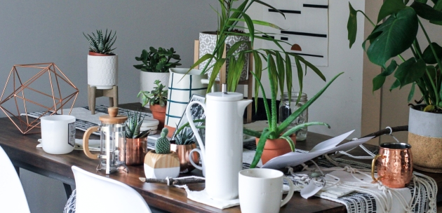 ljekovite sobne biljke sadnice