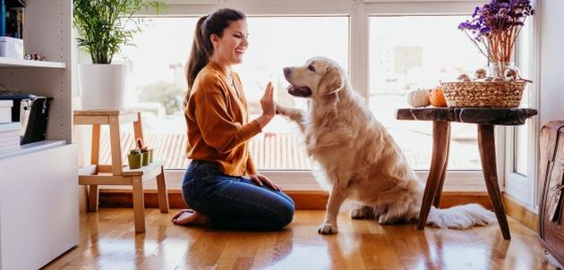 5 stvari koje nikada ne biste smjeli raditi svom psu