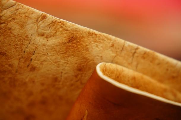 Veganska koža od gljiva kao inovativna alternativa životinjskoj i umjetnoj koži © Alexander Bismarck-1