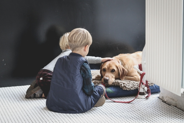 pasmine za djecu labrador retriver i djeca
