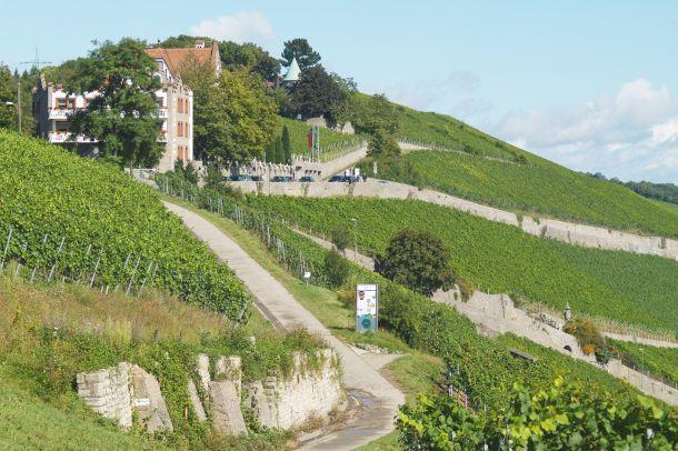 vinarija Würzburger Stein