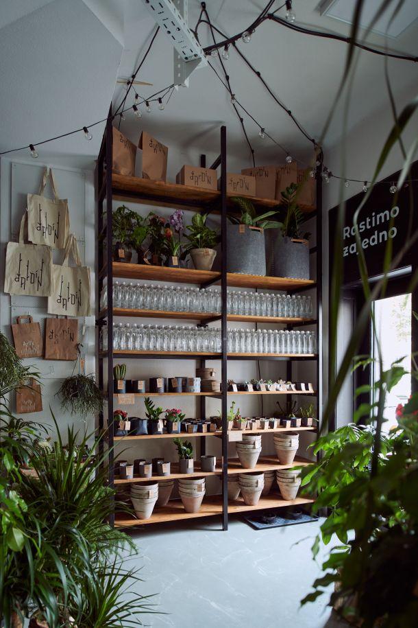 dardin hotel za biljke u dezalicevoj ulici