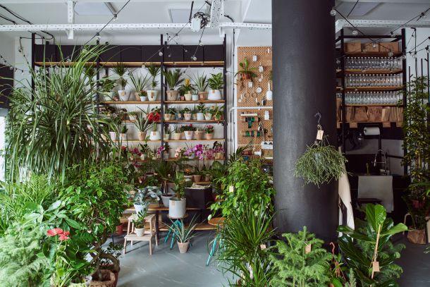hotel za biljke dardin zagreb dezaliceva ulica