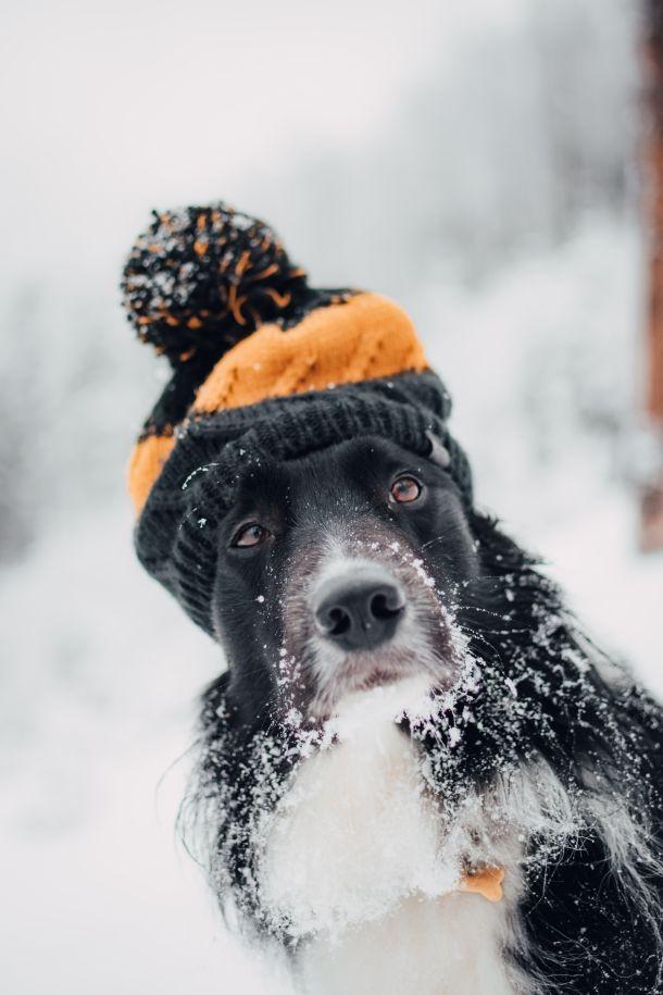 njega pseće dlake na snijegu