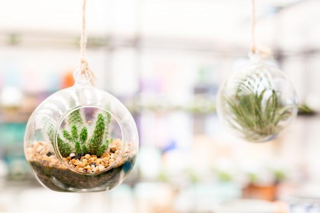 kaktus u kuci kucno bilje biljke terarij