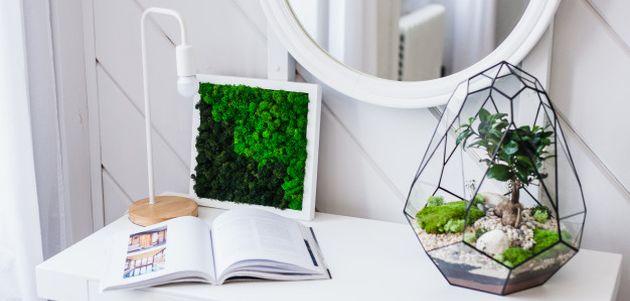 kucne biljke terarij za biljke