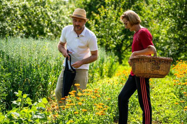 ljekovito bilje snaga biljaka travar momcilo