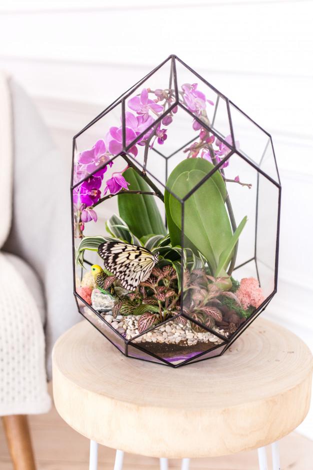 orhideja orhideje u kuci stanu