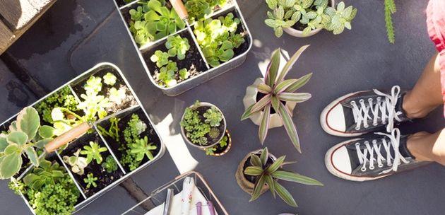 biljke ljekovito  bilje