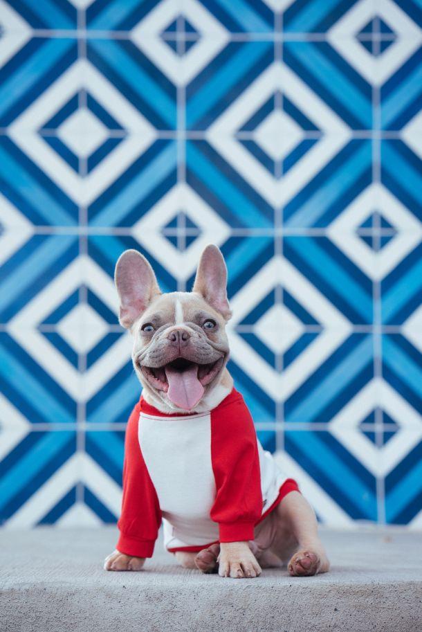 kaput za psa od prirodnog materijala