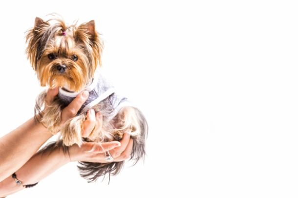 kaputic za pse kucne ljubimce kaput za sa