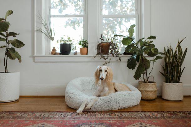 kreveti za psa pse