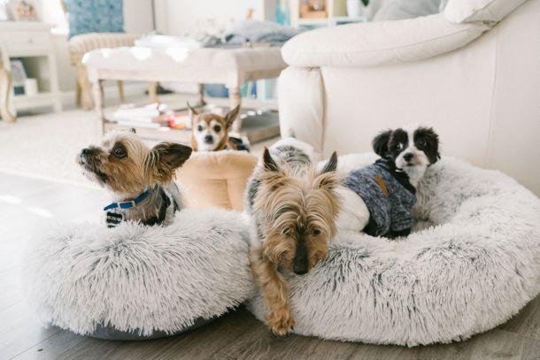 krevetici kreveti za kucne ljubimce pse pas