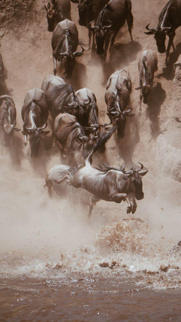 nacionalni park tanzanija