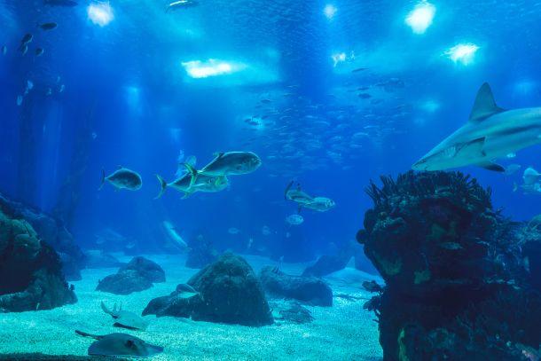 akvarij na malti