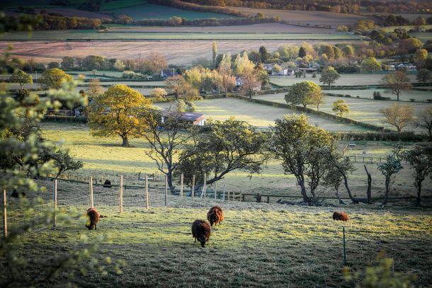 engleska farma ovaca