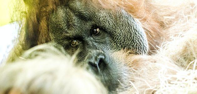 Uživajte virtualno 24 sata u tajnama najdražih životinja