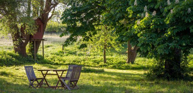 gradski park zelenilo stabla drvece