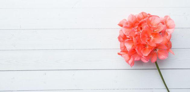 Stvorite cvjetnu oazu uz pelargonije na vašem balkonu, terasi ili vrtu