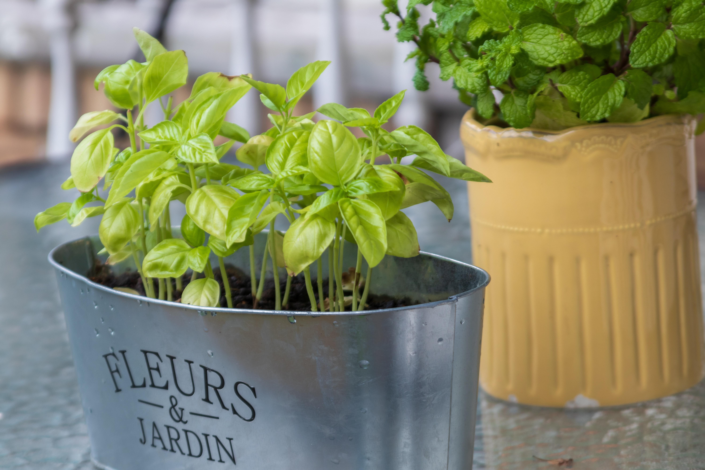 bilje u posudi za vrt