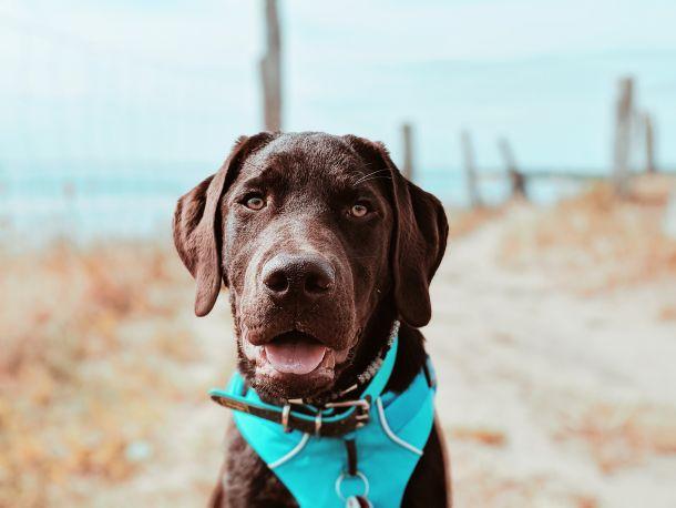 pas na plazi u dalmaciji