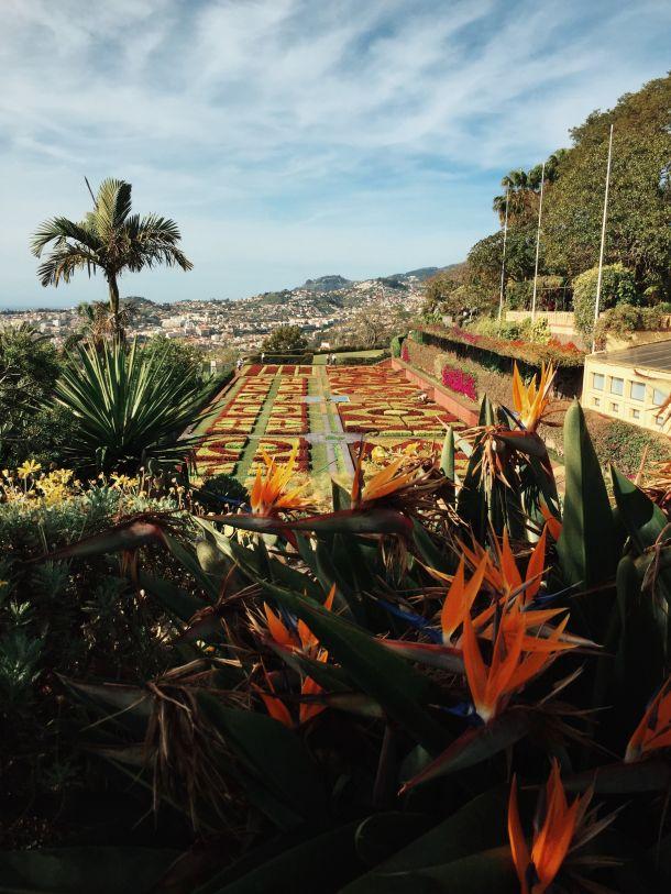 Funchal glavni grad madeira otoka